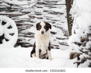 Dog portrait on the background of a snow-covered village fence. Lots of snow, winter
