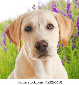 Dog portrait on field with flowers