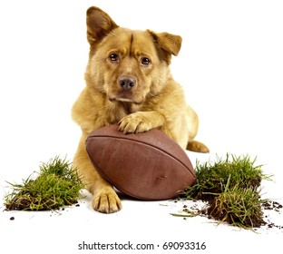 dog posing with football and grass turf. Isolated on white