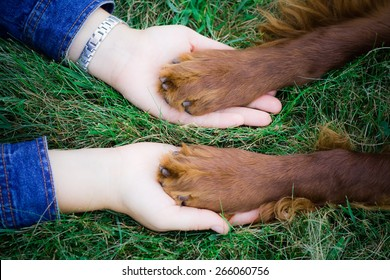 Dog pressing his paw against a woman hand