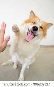 The Dog to pressing his paw against a man hand
