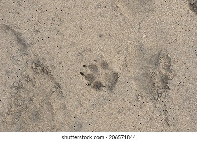 A dog print in the sand at a Costa Rica beach.