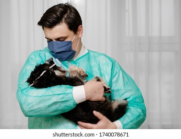 dog in a protective mask, unsanitary conditions, doctor holds in his hands dog that is sick with coronavirus,