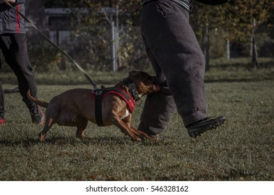 dog protects the person