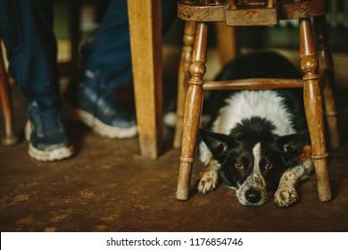 Dog in pub