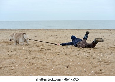 The dog pulls the child for a leash on the sand on the beach and the ocean. Pet training at the beach