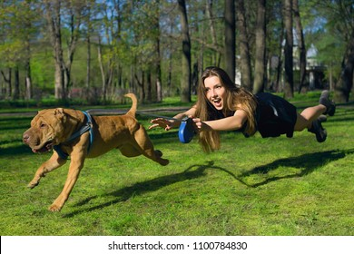 the dog pulls for a girl, a naughty dog girl in flight for a dog. Funny not stand on my feet. The dog is running ahead