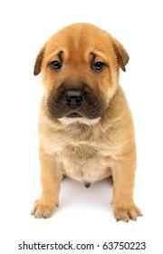 Dog puppy cute sad isolated on white background