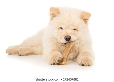 Dog, puppy eating a bone
