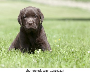 dog puppy on the grass