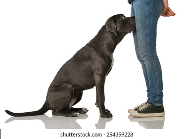 Dog put head between legs