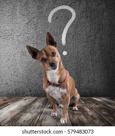 Dog with quizzical expression