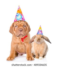 Dog And Rabbit In Birthday Hats Sitting Together Isolated On White Background