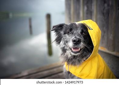 Dog with rain coat at the lake. Dog in the rain.