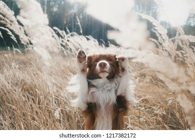 dog-raise-both-paws-autumn-260nw-1217382172.jpg