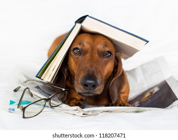 Dog reading the interesting book