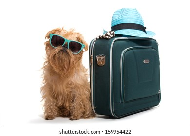 Dog ready for vacation, isolated on white background