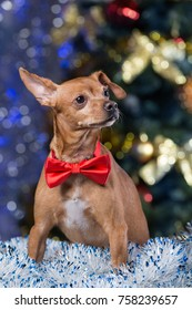 a dog with a red bow sits on a tinsel on the background of a Christmas tree, waiting for a holiday
