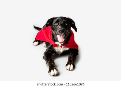 Dog in a Red Cape