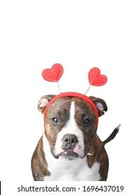 Dog with Red Heart Headband