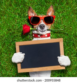 dog with a red rose in his mouth with an blank and empty blackboard or placard