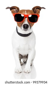 dog with red shades