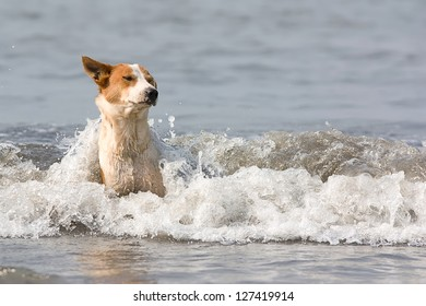 The dog with red stains bathes in inflow waves.
