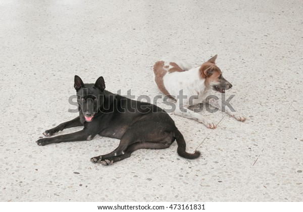 Dog Relax On Terrazzo Floor Stock Photo Edit Now 473161831