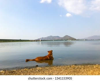 A dog relax in pond because weather is high