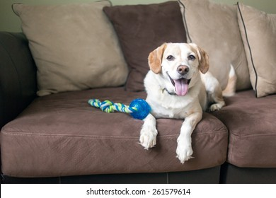 Dog relaxes on the couch after playing fetch