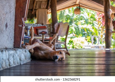 Dog Relaxing in the Cabana
