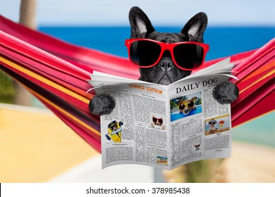 dog relaxing on a  hammock  with red sunglasses on summer vacation holidays at the beach  reading newspaper or magazine