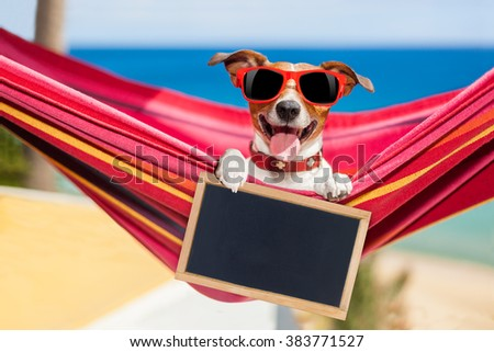dog relaxing on a