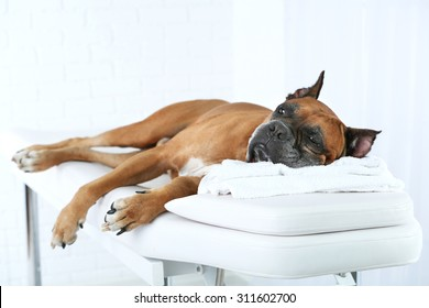 Dog relaxing on massage table, on light background
