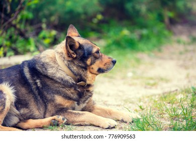 Dog relaxing outdoors on dirt road in summer