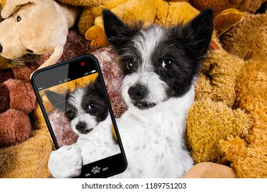 dog resting  having  a siesta  on his bed with his teddy bears,   tired and sleepy, taking a selfie with smartphone or telephone