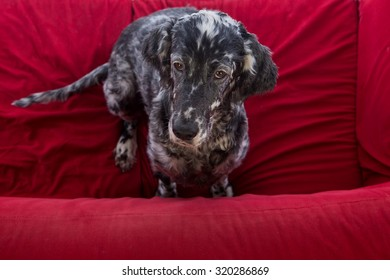 dog is resting on the couch