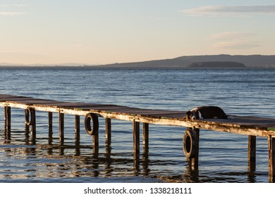 A dog resting on a pier overa a lake, with warm golden hour light