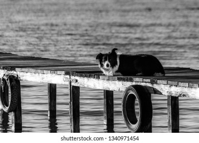 A dog resting on a pier overa a lake