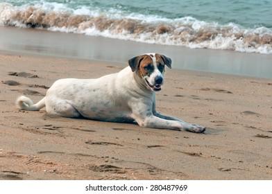 Dog resting on the sea sandy beach