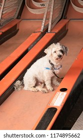 Dog Resting On A Skeet Ball Alley