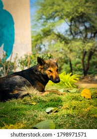 dog resting on turf photos