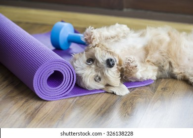 A dog resting on yoga mat, dumbbell sets behind