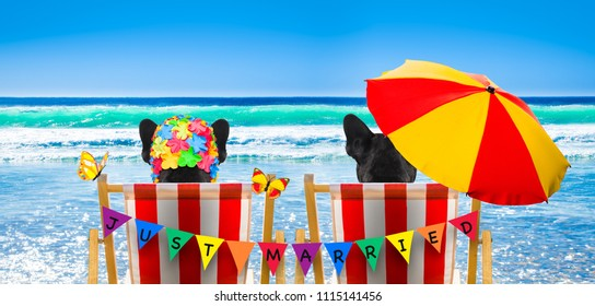 dog resting and relaxing on a hammock or beach chair under umbrella at the beach ocean shore, on summer vacation holidays, just married