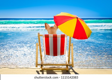 dog resting and relaxing on a hammock or beach chair under umbrella at the beach ocean shore, on summer vacation holidays