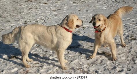 Dog the retriever