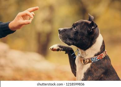 dog with a reward