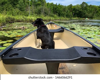 A dog rides in a canoe in Minden Hills, Ontario.