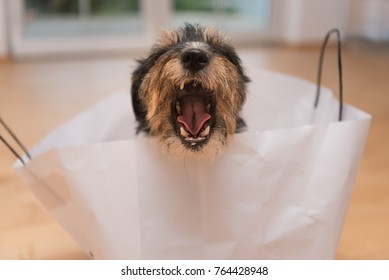 Dog rips the mouth wide and sits in a paper bag,