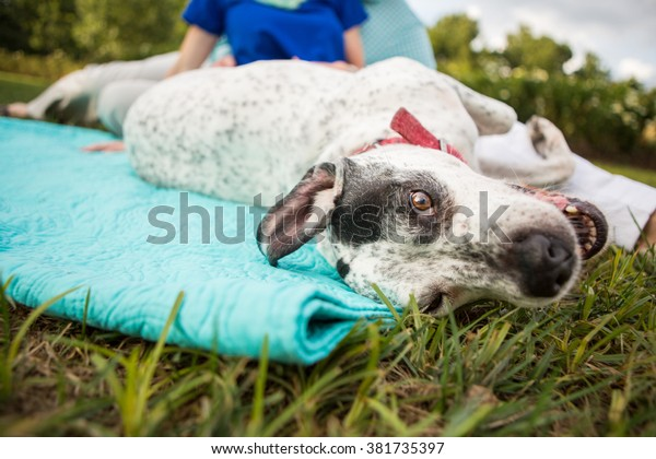 Dog rolls over during outdoor picnic with young couple